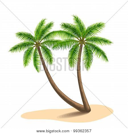 Palm Trees, Isolated On White Background. Vector Illustration