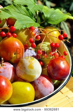 Fresh Plums And Viburnum In A White Bowl With Green Leaves
