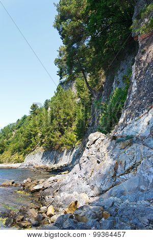 Beautiful rocky beach with pine trees on rocks