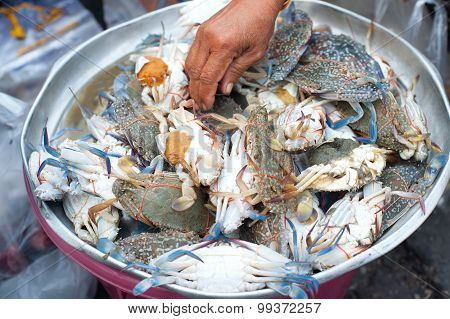 Sea Crab For Sale