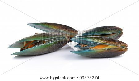 Mussel On White Background