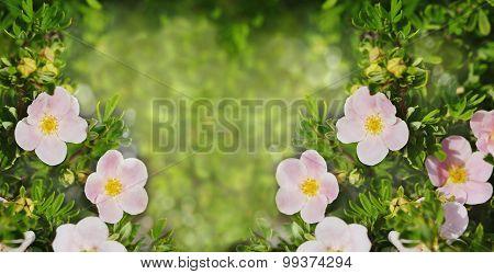 Summer Beautiful Flowers Over Garden Nature Background