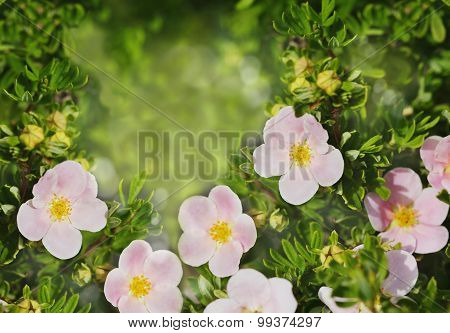 Summer Beautiful Flowers Over Garden Nature Background