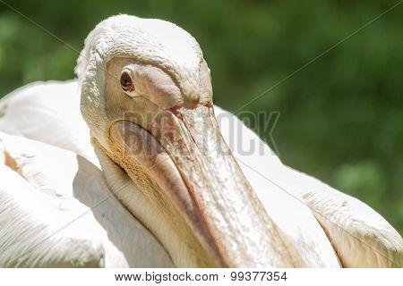 Pelican Close
