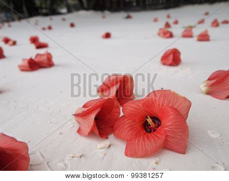 Flower on pure white sand