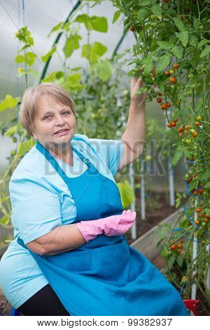Happy pensioner woman wearing apron and gloves in greenhouse