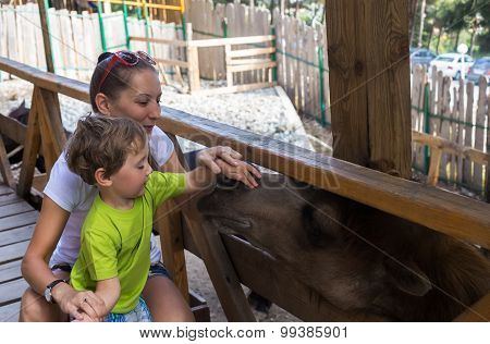 Little Boy And Mother In Contact Zoo