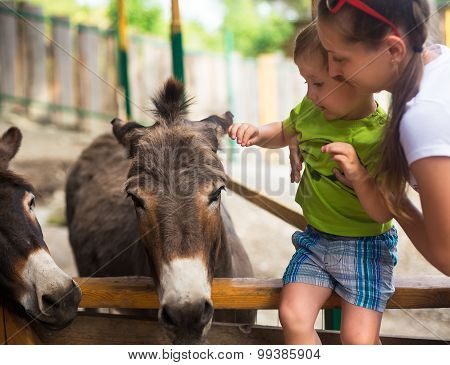 Little Boy And Burro In Zoo