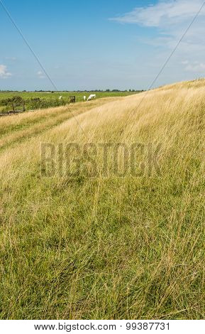 Yellowed Grass At An Embankment In Summertime
