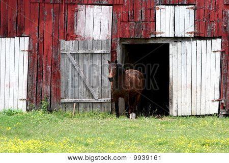 Nashville Horses
