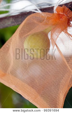 Figs In Wrapping Bag