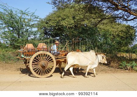 Burmese Man Riding Ox Cart At Ancient City In Bagan