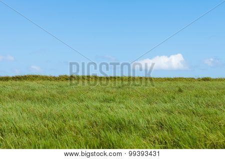 Vast grasslands and sky beautiful natural landscape