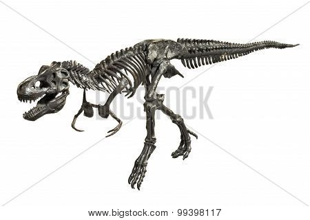 Dinosaur Tyrannosaurus-rex Skeleton isolated Metal Model