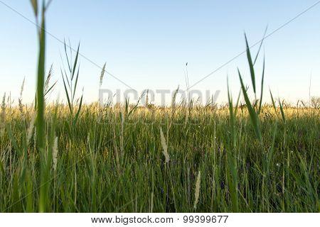 Steppe Summer