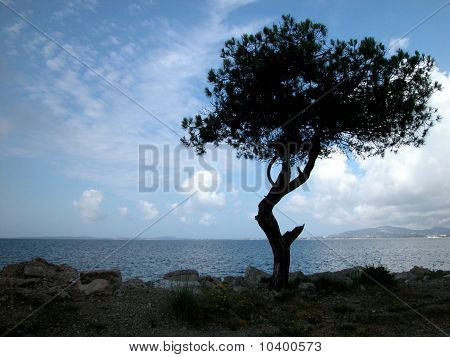 Solitary Tree By The Sea