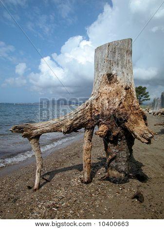 Bole Of A Dead Tree