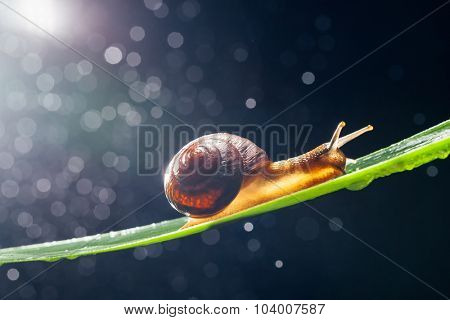 snail with particles bokeh as the background