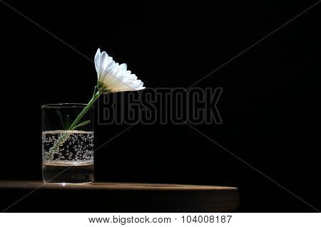 Daisy in a glass on black background