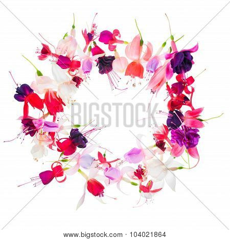 Fuchsia Flower Wreath With Place For Your Text Or Image Is Isolated On White, Card For Summer Or Spr