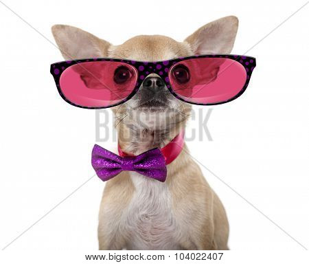Chihuahua wearing a bow tie and glasses in front of a white background