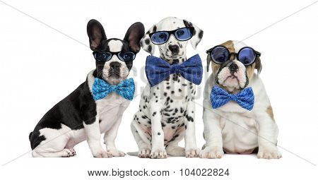 Group of dogs wearing glasses and bow ties