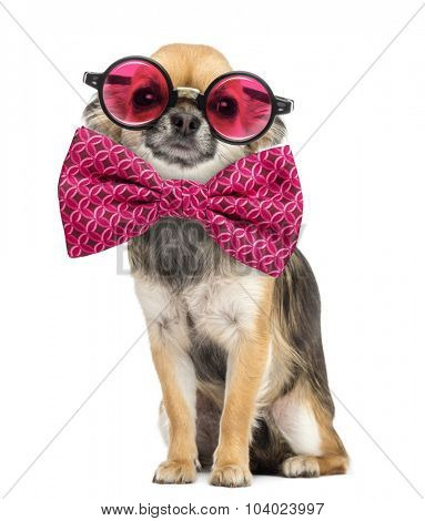 Chihuahua wearing round glasses and a bow tie in front of white background