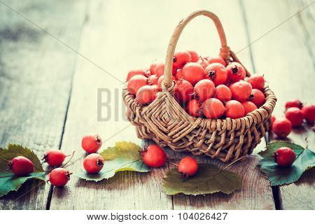 Hawthorn Berries In Basket On Rustic Table. Selective Focus.