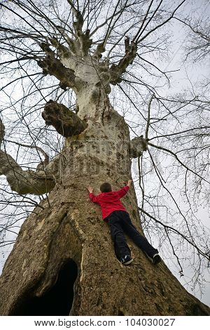 A Big Tree Climbing Child