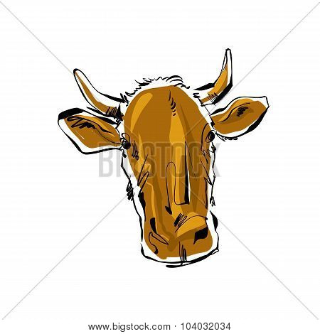 Colored Hand Drawn Cow, Vector Illustration Of A Cow.