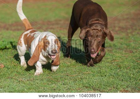 Doggie park pals