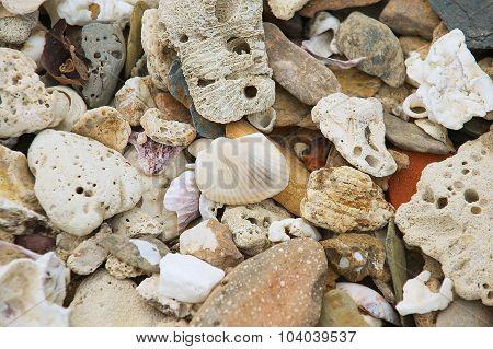 Sell and small stones at the sea shore at Sam Roi Yot National park, Thailand.