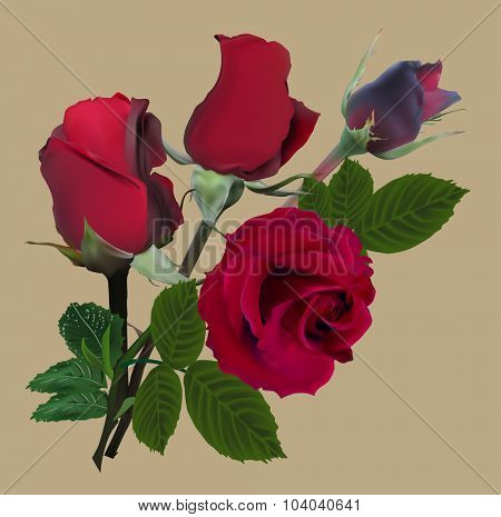 illustration with rose flower isolated on brown background