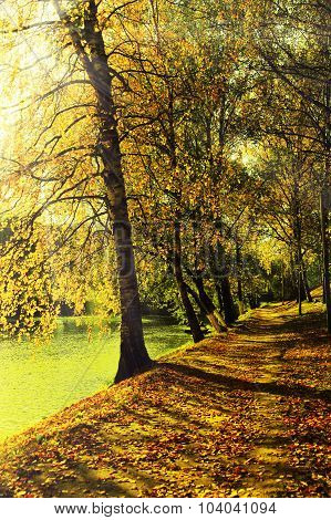 Picturesque Walkway In Autumn Park With Rays Of Soft Light.