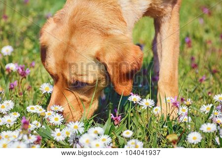 Sniffing Dog