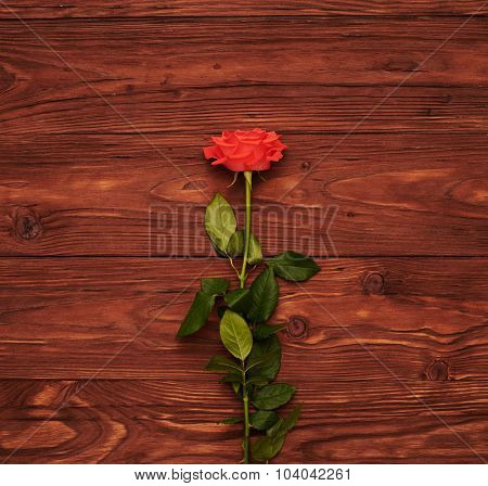 one red rose on wooden brown background