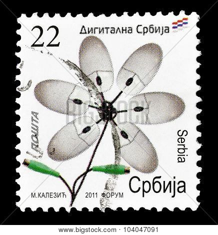 Serbia 2011