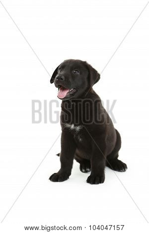 Beautiful Black Labrador Puppy Sitting, Isolated On A White