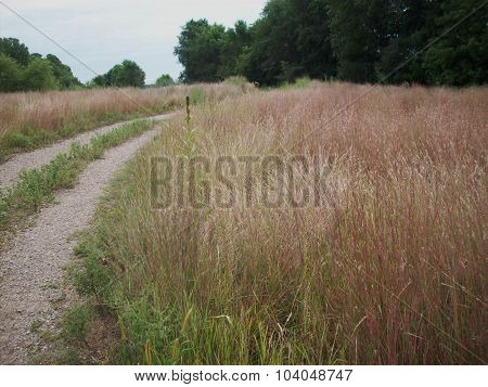 Path in a Field