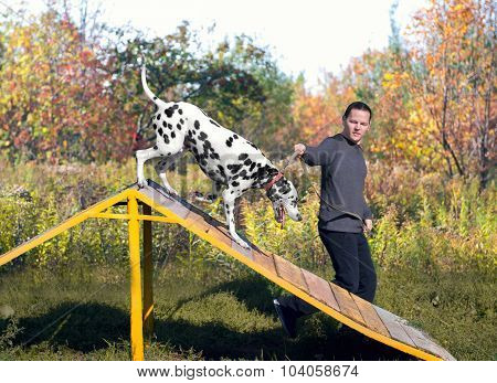 Dalmatian Dog In Nature