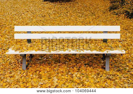 Lovely Bench In Park Covered With Yellow Leaves