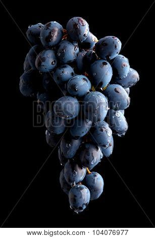 Branch of wet grape over black background