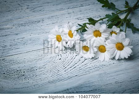 Daisy flowers on white grunge wooden background