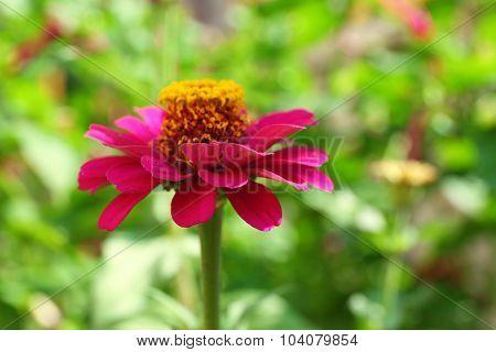 Fresh flower over green grass background