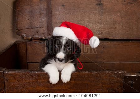 Adorable puppy wearing a santa hat in an antique wooden chest