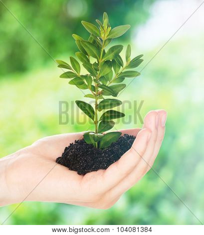Hand of woman holding young plant on natural background