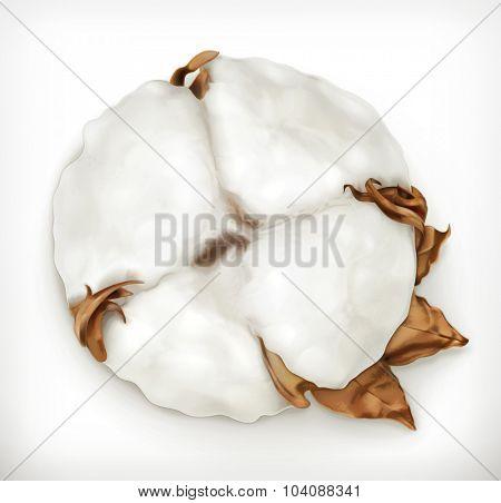 Cotton, vector icon