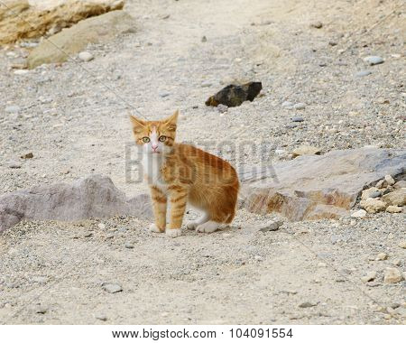rufous striped kitten closeup outdoor