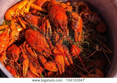 crayfish for beer, boiled crustaceans, crayfish, beer snacks, go