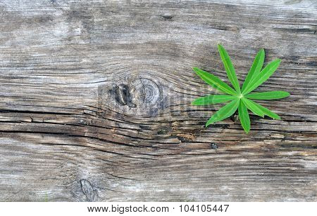 Green Leaf on the Old Board